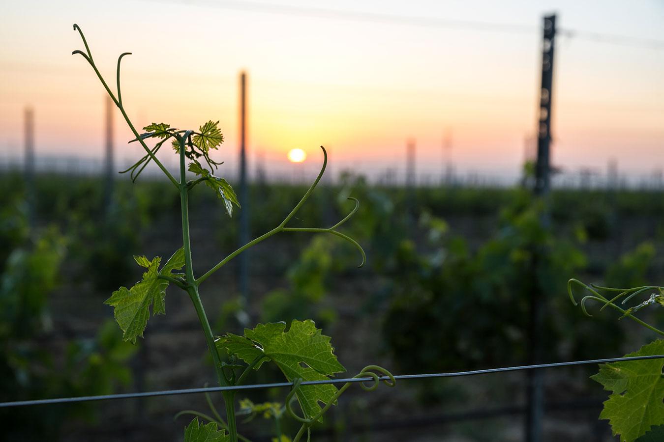 vinery Baku